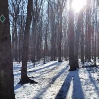 Southeast area of Kinns Road Forest, December 2015. Photo credit: Jennifer Viggiani